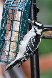 backyard critters birdfeeder basics