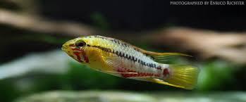 aquamark tropical fish wholesale