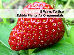8 ways to use edible plants as ornamentals