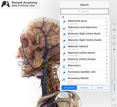 anatomy terms dictionary image collections learn human anatomy image