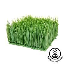 decorative ornamental wheat grass plastic artificial wheatgrass