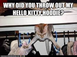 This Means War Meme - this means war i can has cheezburger funny cats cat meme