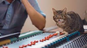Lil Bub Meme - in the studio with lil bub youtube