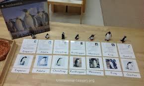antarctica penguins trillium montessori