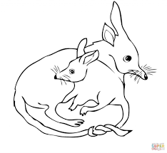 bilby mom with bilby baby coloring page free download animal
