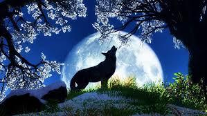 symbolism of january u0027s wolf full moon u2013 everything soulful