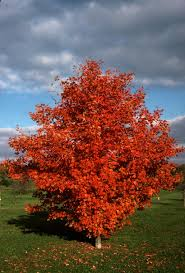 trees shrubs u2013 garden professors