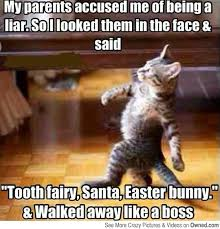 Funny Christmas Cat Memes - 32 of the best funny cat memes all things fluffy pinterest