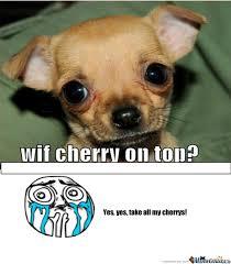 Cute Pet Memes - cute dog by recyclebin meme center