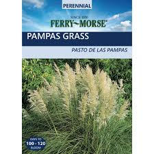 ferry morse ornamental grass pas plume seed 2057 the home depot
