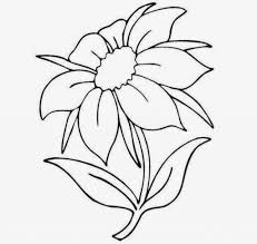 easy to draw flowers drawing pencil