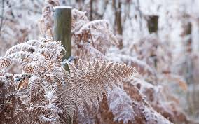 the best of winter in pictures gardening