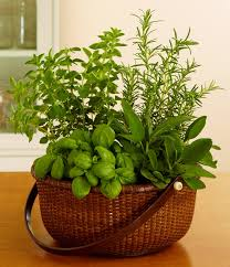 Potted Herb Garden Ideas Category Decoration 0 Doorstop Info