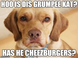Disappointed Dog Meme - disappointed dog