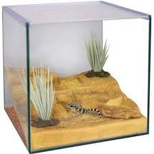 reptile one desert terrarium starter kit amazing amazon