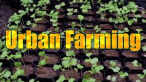 Benefits Of Urban Gardening - benefits of urban farming youtube