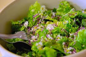 cuisine plantes sauvages cuisiner les plantes sauvages stage atelier cuisine a vriange