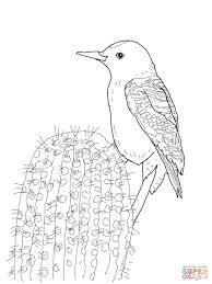gila woodpecker coloring page free printable coloring pages