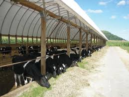 Backyard Dairy Cow Poultry Farmtek Blog