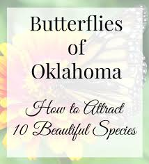 plants native to oklahoma butterflies of oklahoma ten beautiful species and how to attract