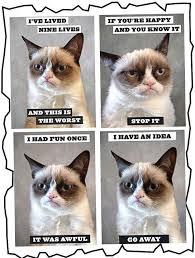 Make Your Own Grumpy Cat Meme - cheer up grumpy cat you re a million dollar megastar she s got