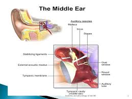 Attic Ear Anatomy Anatomy And Physiology Of The Middle Ear Ppt Video Online Download