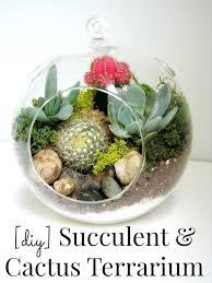 les 25 meilleures idées de la catégorie terrarium cactus sur