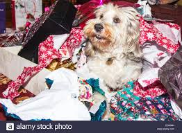 day opening presents unwrapping wrapping paper pet