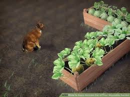 how to keep rabbits out of your garden home design ideas and