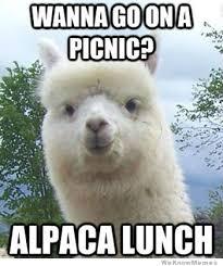 alpaca lunch weknowmemes