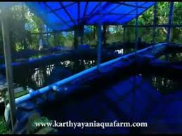 karthyayani aqua fishfarm ornamental fish farm in kottat