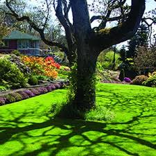 Lawn And Landscape by 100 Best Spring Lawn Care Tips Images On Pinterest Garden Ideas