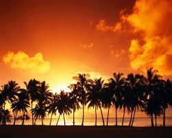 palm trees wallpaper 24