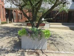 410 gallon plastic tree tub planters tree tubs site furnishings
