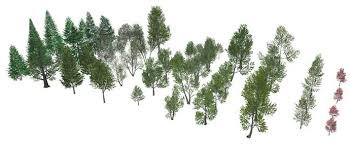 48 3d trees for sketchup sketchucation