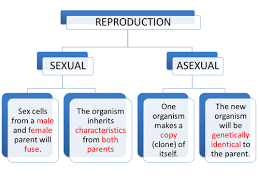 sexual vs asexual reproduction by seasquirt teaching resources tes