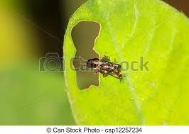 kasten ältest wanzen auf haus stockfoto bild kasten skarabäus arten käfer stock foto bilder 126 skarabäus arten käfer
