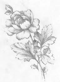 flowers drawings interesting begonia flower oil painting picture