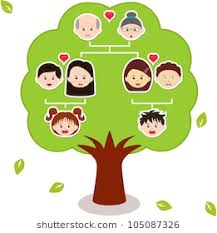 family tree drawing images stock photos vectors