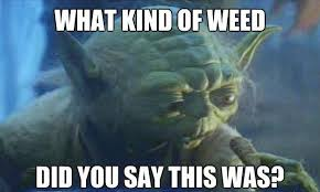 Funny Yoda Memes - tgif here are the best weed memes of the week slyng com