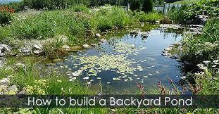 How To Build A Backyard Build Pond Water Garden Design Backyard Pond Diy Building Guide Idea