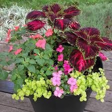 Fragrant Container Plants - best plants for balcony garden