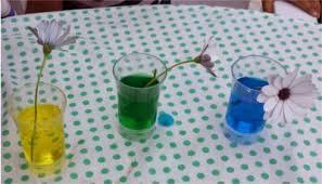 experimento con flores y colorante experimentos niños y