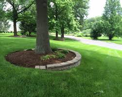 tree landscape wood chips around trees ground cover plants for