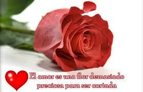 imagenes tiernas y romanticas ramos de rosas con dedicatoria de amor tiernas y románticas