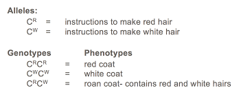 codominance worksheet blood types worksheets