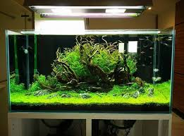 Aquascape Store Beautiful Scape