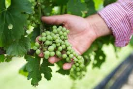 spirit halloween grapevine winery events u0026 festivals new kent winery u2014 new kent winery