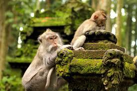 sangeh monkey forest in bali ubud attractions
