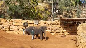 Tisch Family Zoological Gardens - גן החיות התנ